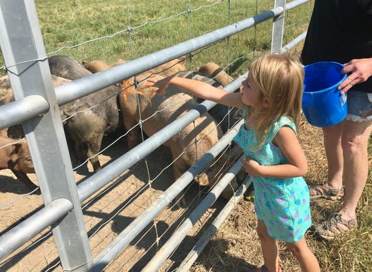 Avery Guidry, 4, feeds slices of carrots to pigs at Market Basket Youngsville July 26, 2018. She is visiting Acadiana farms with her family this month.