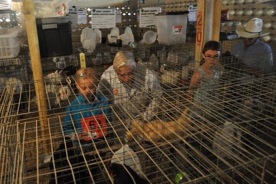 Steve Gardner with young contestants in the chicken pens at the Eddy County Fair July 26.