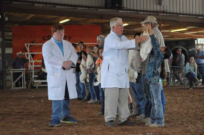 A young contestant shows off her broiler to judge Steve Gardner July 26 in the showring at the Eddy County Fair.