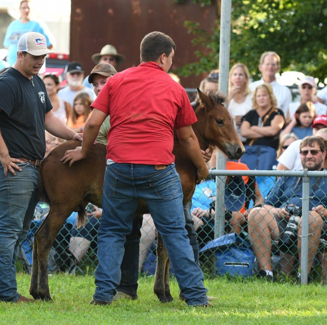 Chincoteague's big pony auction makes all kinds of dreams come true