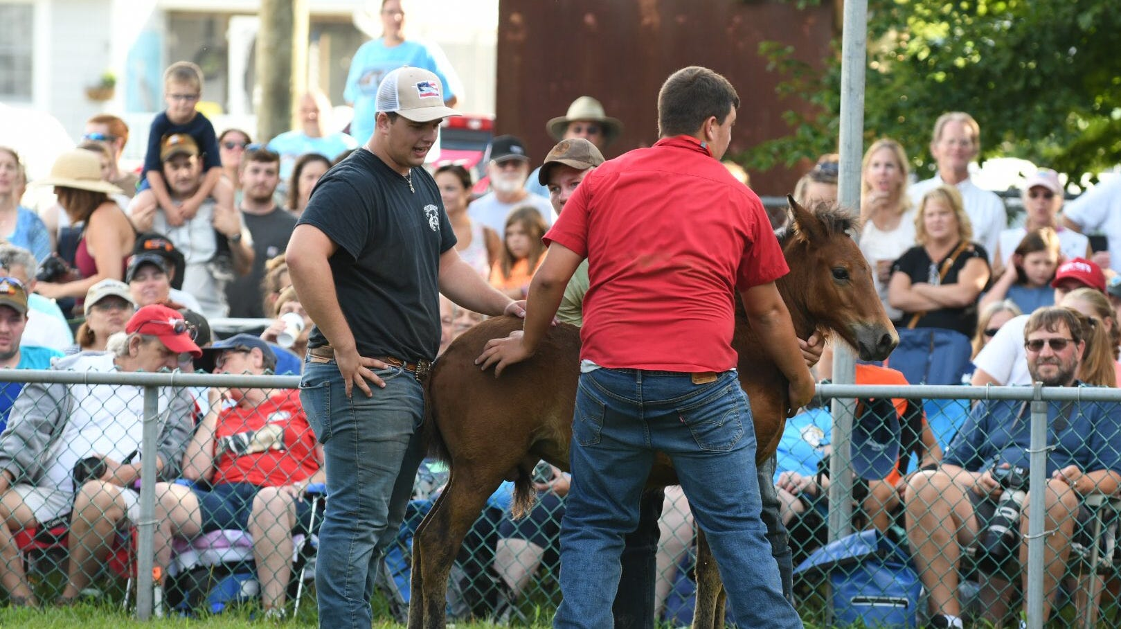 Chincoteague's big pony auction makes all kinds of dreams come true