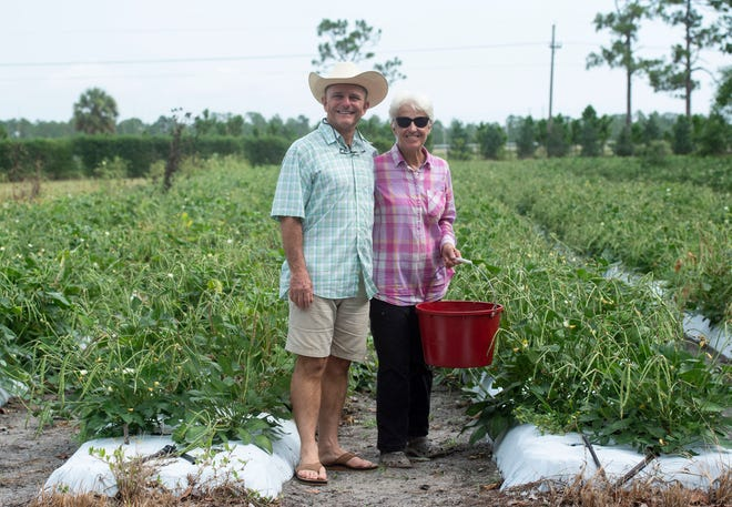 "Kai-Kai Farm owners Carl Frost (left) and Diane Cordeau, pictured on Monday in a field on their 40-acre property in Indiantown where they grow broccolini, lettuce, tomatoes, eggplants, okra, beans, carrots, kale and a variety of other vegetables. ""We discovered farming together,"" Frost said of his wife and business parter, noting that their first agricultural interest was viticulture. Frost is the property manager and enjoys growing the hospitality offerings at the farm and Cordeau is the grower, cultivating the 80 different crops."