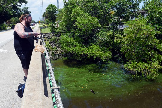 """Joshua Gellman, of Stuart, reels in a fish from the Poppolton Creek Bridge on Thursday, July 26, 2018, as blue-green algae flows under the bridge in the South Fork of the St. Lucie River. """"I would be concerned (about the algae) if I were eating the fish, but I'm just fishing for sport,"""" Gellman said. """"I love to fish so a little algae is not going to stop me."""""""