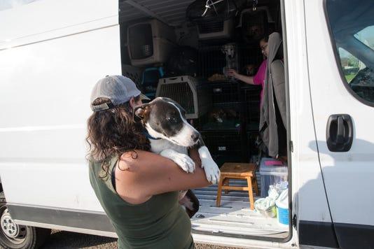 837426002 Shelter Dogs To Washington 4