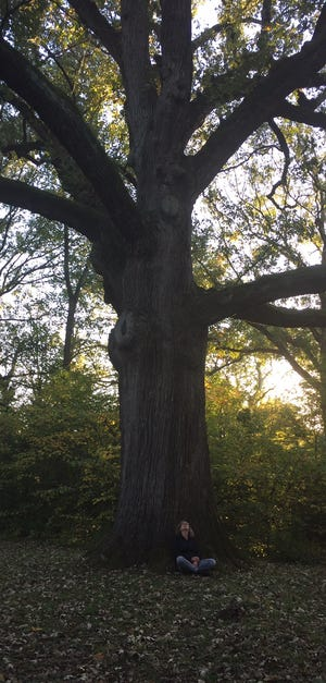 The Kile Oak in Irvington is estimated to be 400 years old.