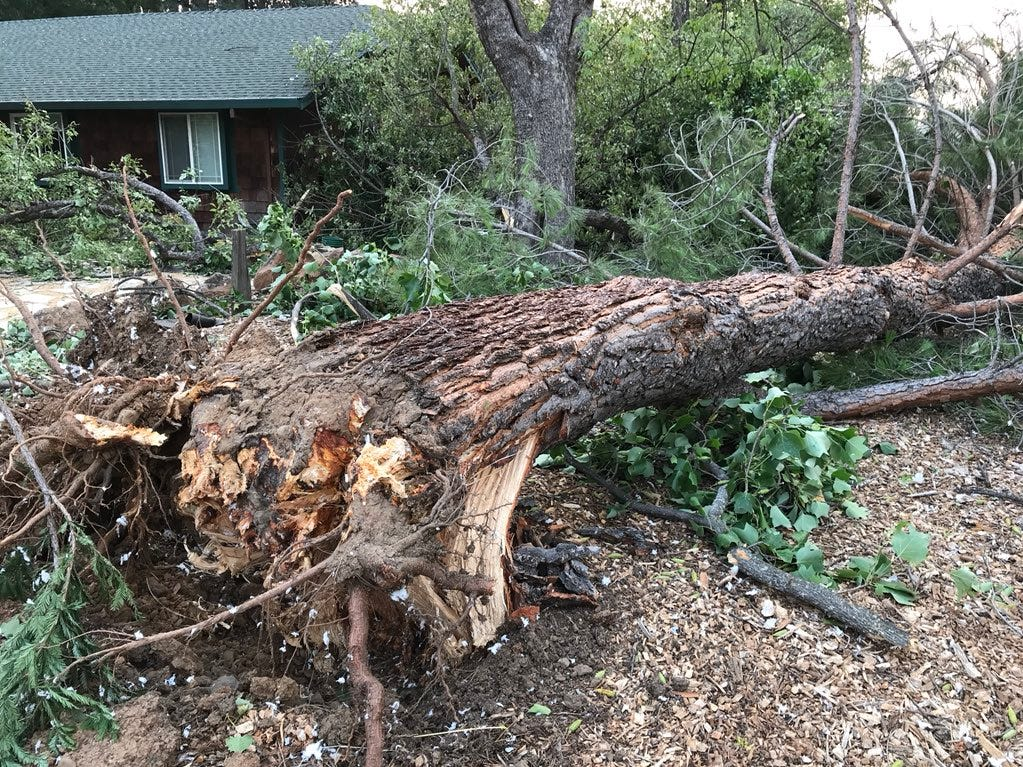 As a result of the Carr Fire, trees were uprooted on Amethyst Way and Harlan Drive.