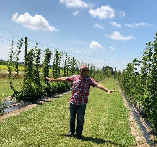 Bill Turechek with the U.S. Department of Agriculture explains planting techniques at the hops yard on Picos Road in Fort Pierce. The University of Florida/IFAS Extension is working with the USDA on a hops demonstration project. Most hops used in beer production come from Pacific Northwest states such as Washington and Oregon.