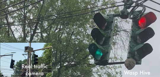 Wasps built a hive under a traffic light in Piermont.