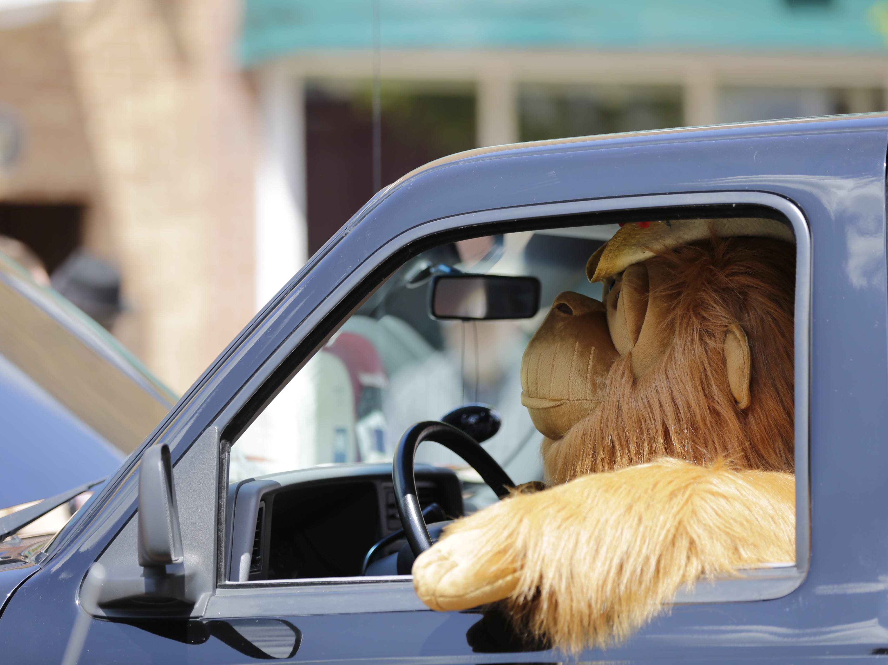 A stuffed animal sits in the drivers seat of a Ford ranger during the car show on Central Avenue at Hub City Days in downtown Marshfield Saturday, July 28, 2018.