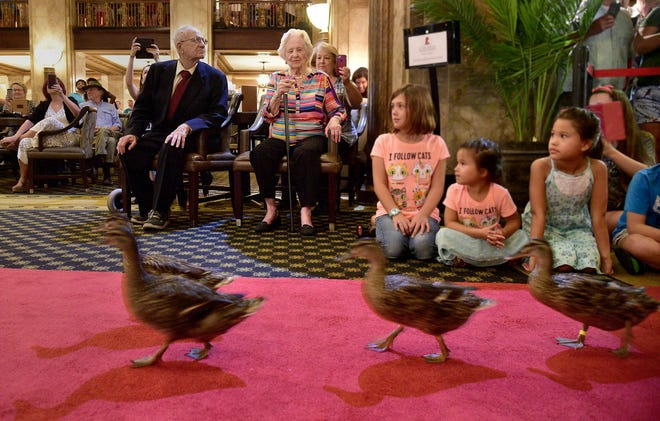 The famous ducks march toward the lobby fountain in Memphis' historic Peabody hotel.