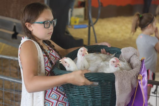 A girl gets ready to show her chickens during a livestock auction, July 28, 2018 at the Eddy County Fair.
