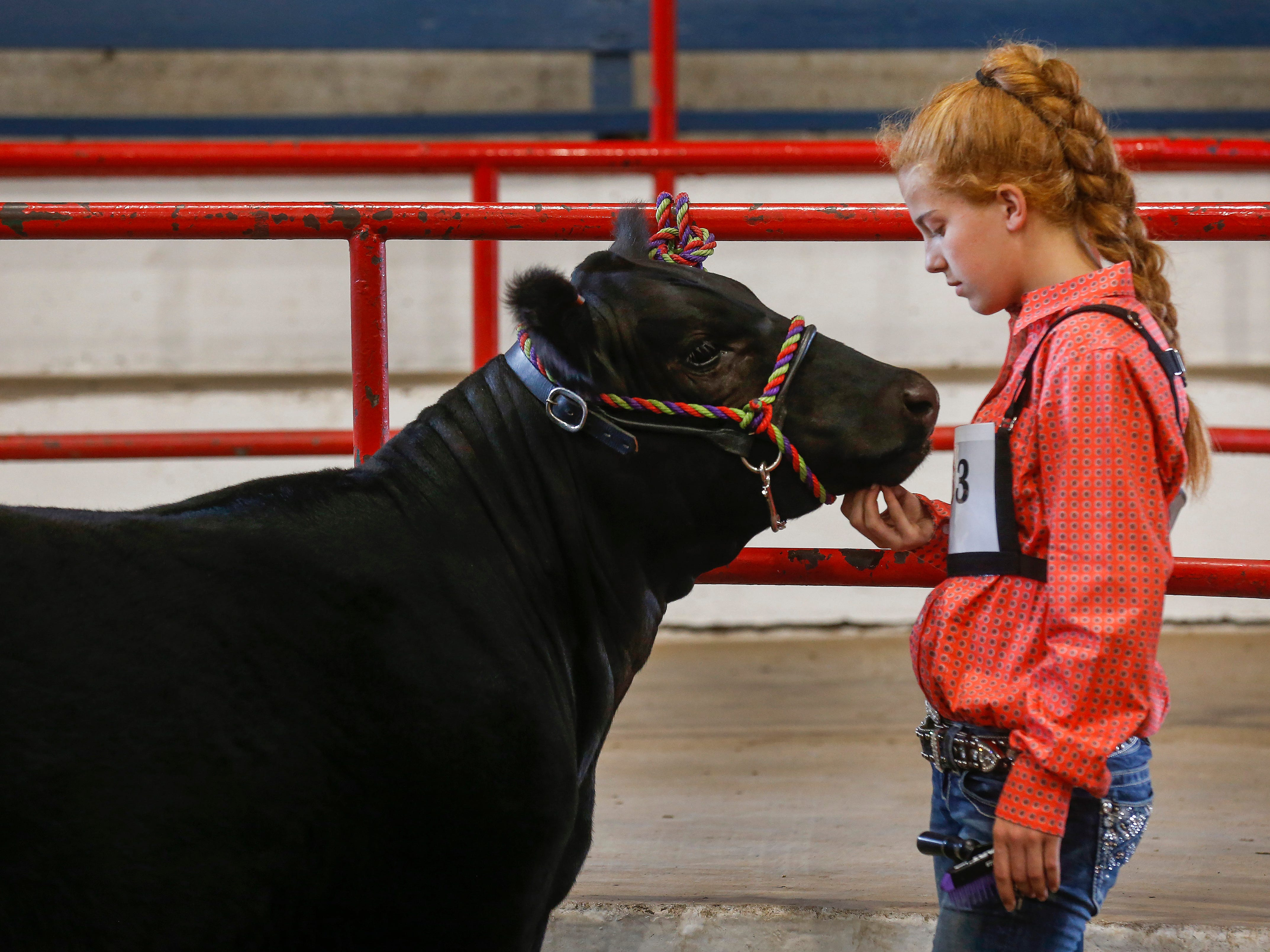 Abby McNish, 13, of Ava, scratches under Annie's chin before the Angus competition at the Ozark Empire Fair on Saturday, July 28, 2018.