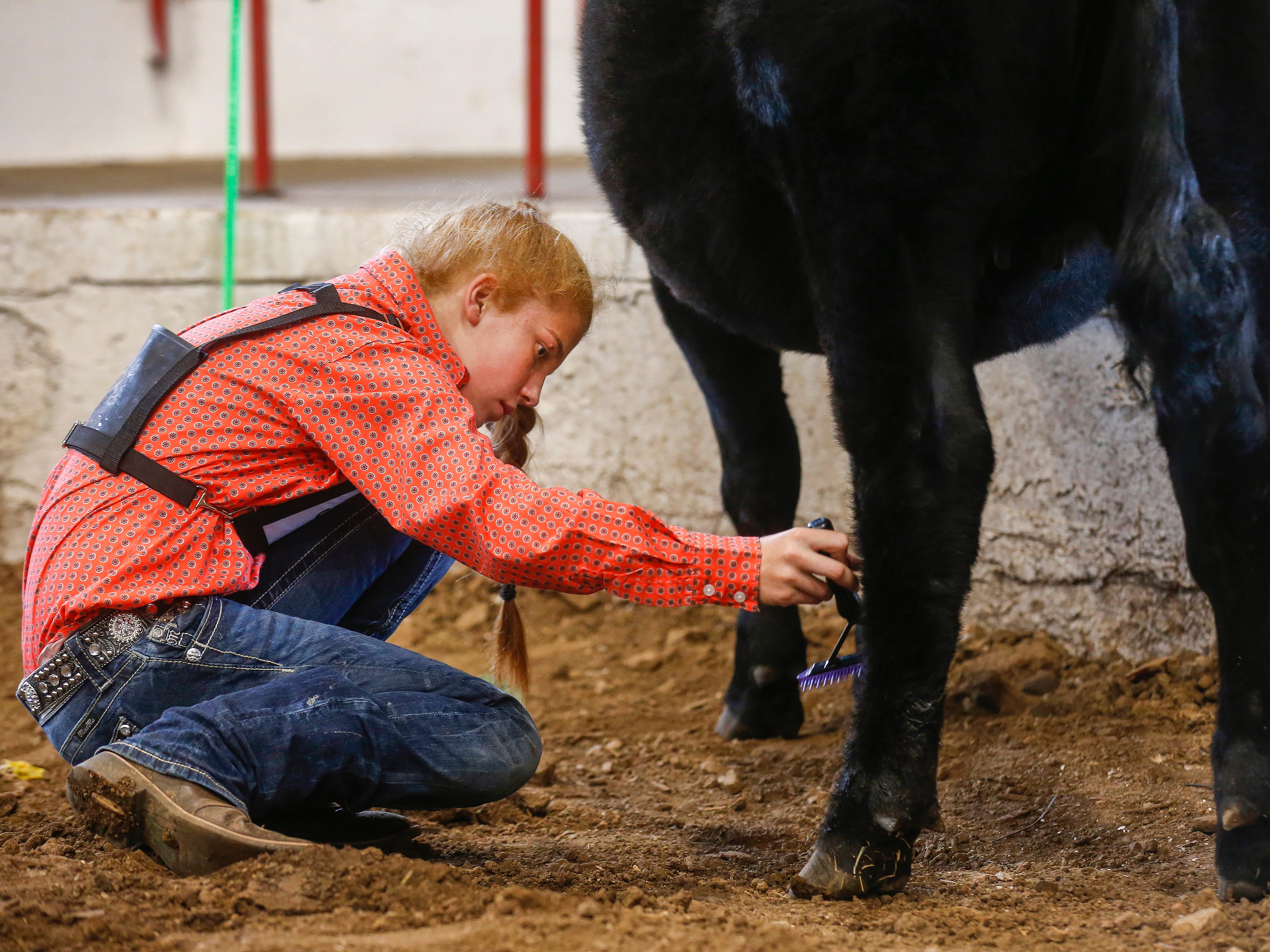 Abby McNish, 13, of Ava, combs Annie before the Angus competition at the Ozark Empire Fair on Saturday, July 28, 2018.