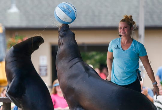 The Sea Lion Splash Show will return to the Ozark Empire Fair this year. The sea lions in the shows are rescues that can't be returned to the wild.