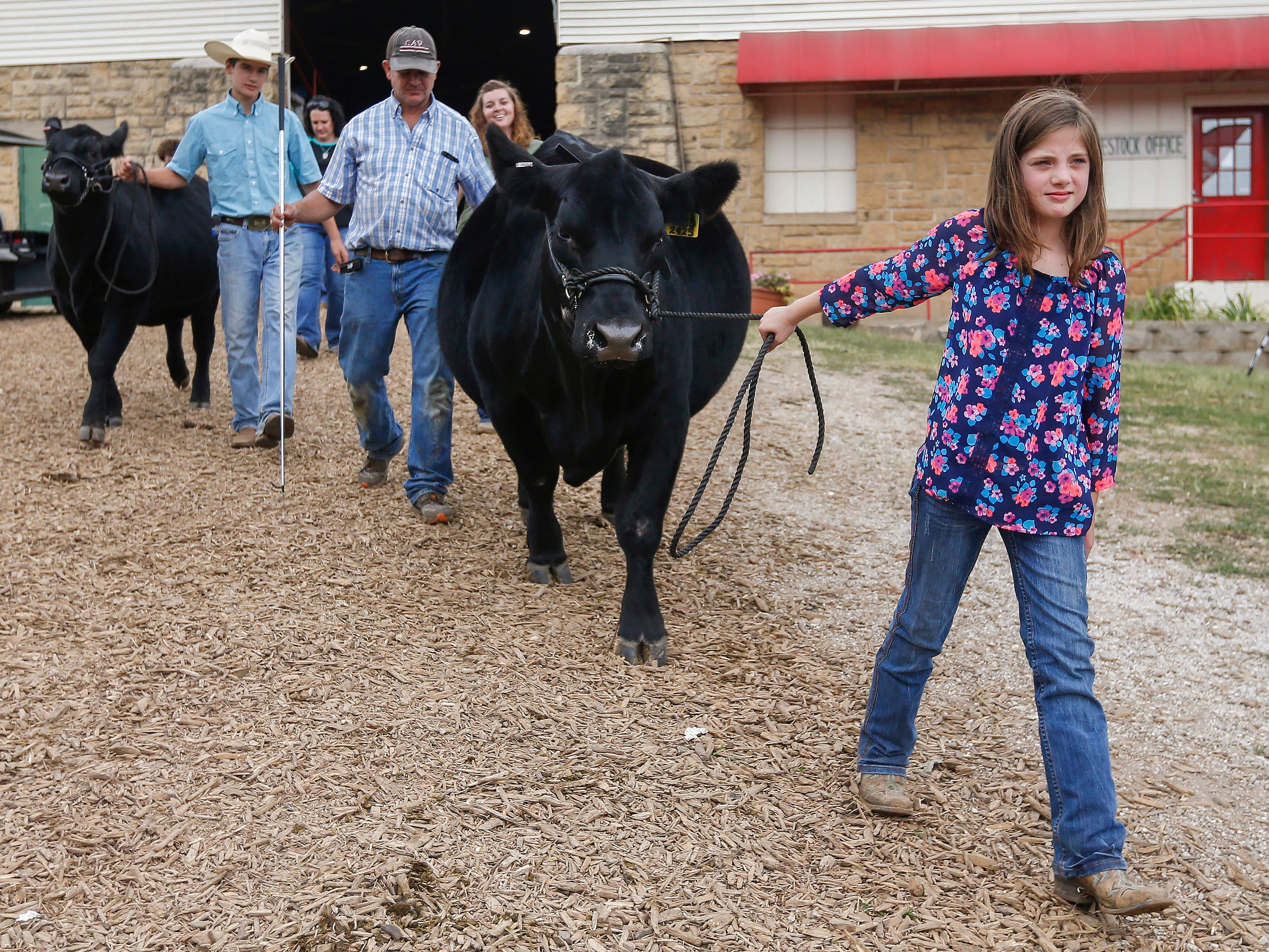 Ellie Dill, 9, of Marshfield, leads her cow out of the arena at the Ozark Empire Fair on Saturday, July 28, 2018.