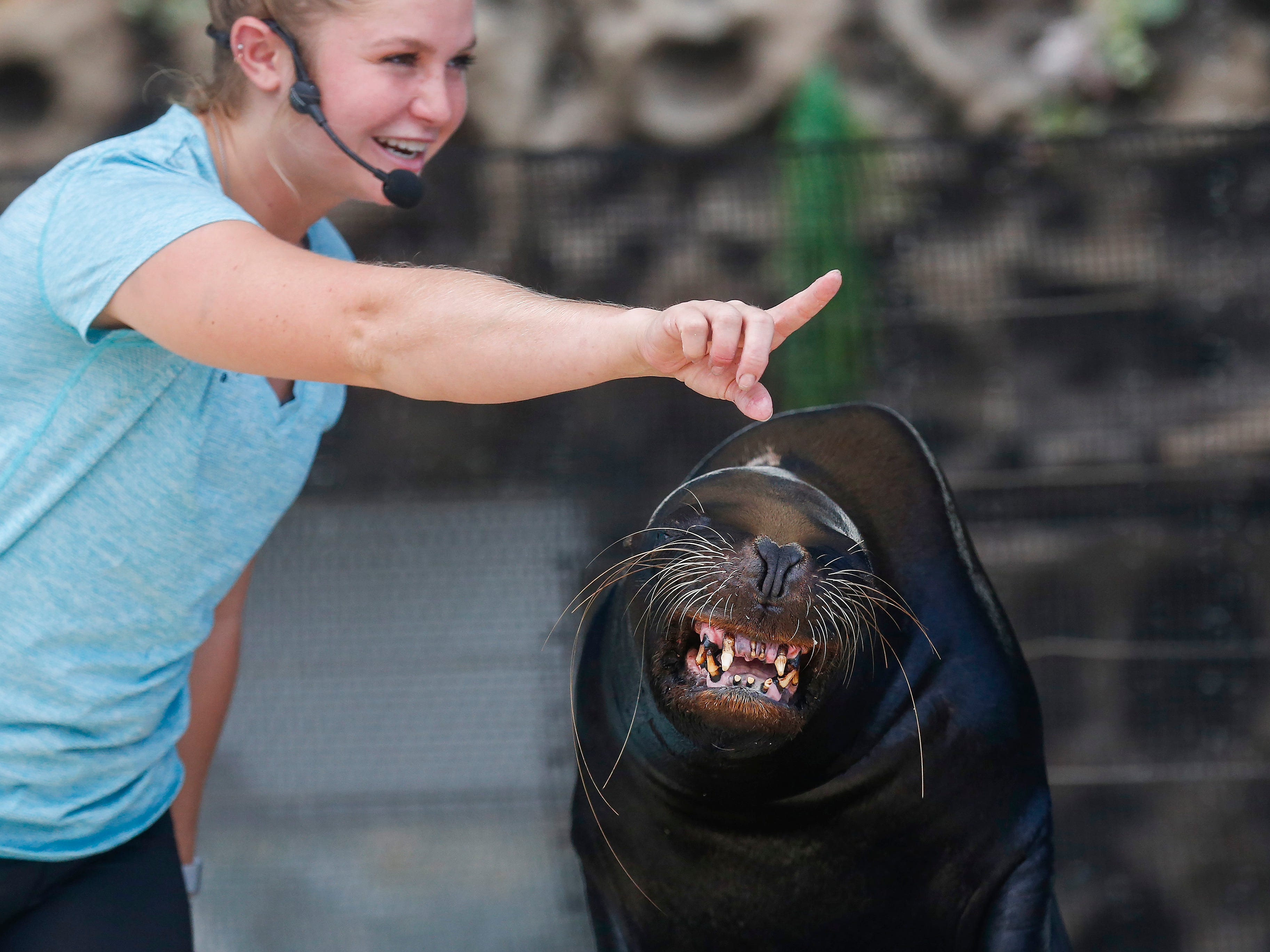 A sea lion smiles at the crowd during the Sea Lion Splash show at the Ozark Empire Fair on Saturday, July 28, 2018.