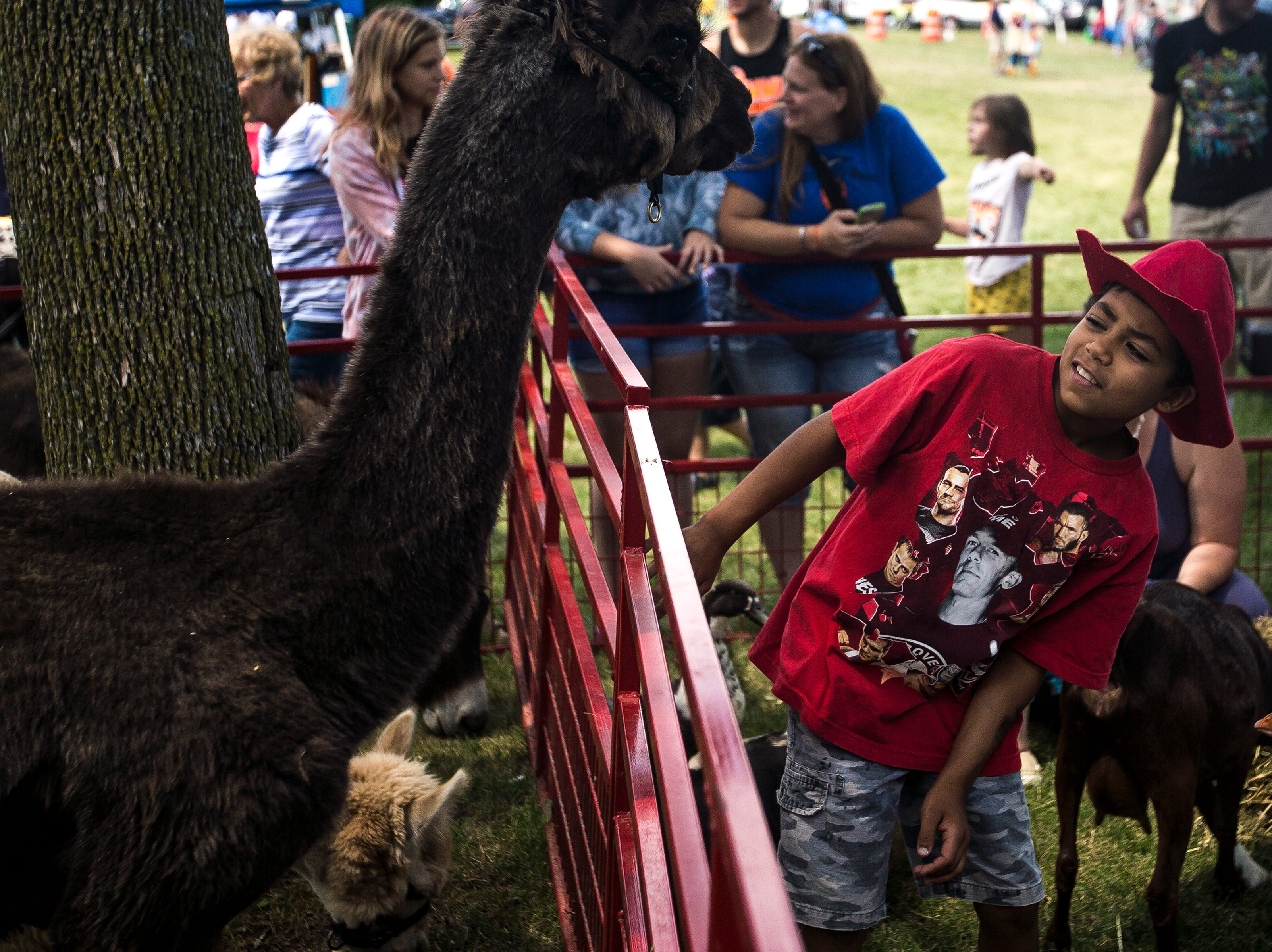 A boy eyes an alpaca in a petting zoo during Celebrate Plover at Lake Pacawa Park in Plover, Wis., July 28, 2018.