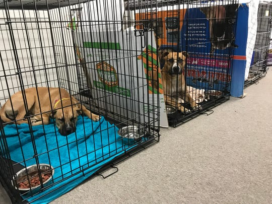 Haven Humane Society evacuated 500 to 600 cats and dogs on Saturday because of the Carr Fire.