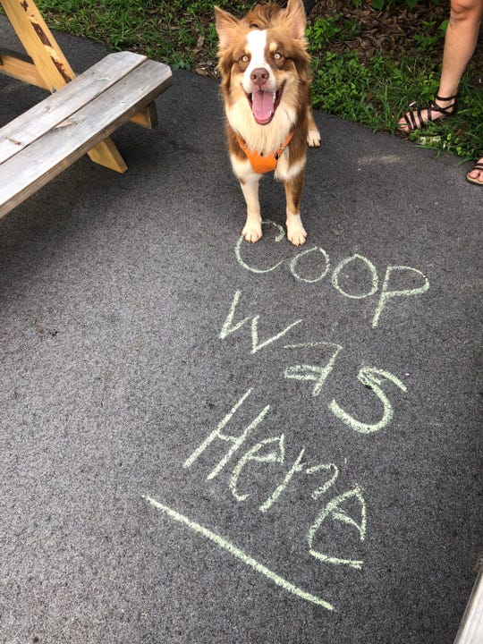 Agent Dale Cooper enjoys the patio at Hexagon Brewing Co.