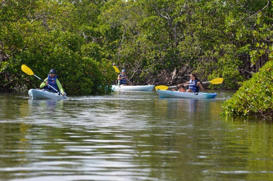 Kayakers with a Paddle Marco group transit the mangrove tunnels. While waters to the north suffer from red tide and blue-green algae blooms, waterways near Marco Island are clear, say kayak outfitters.