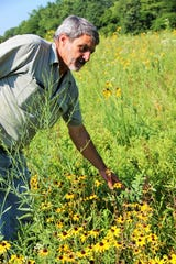 In this July 10, 2018 photo, Jim Barker walks among the native prairie flowers he has planted  on his farm in McLeansboro, Ill. Rather than planting set-aside land in fescue, Barker has transformed his property into small patches of prairie that resemble what Hamilton County would have looked like before modern agriculture.