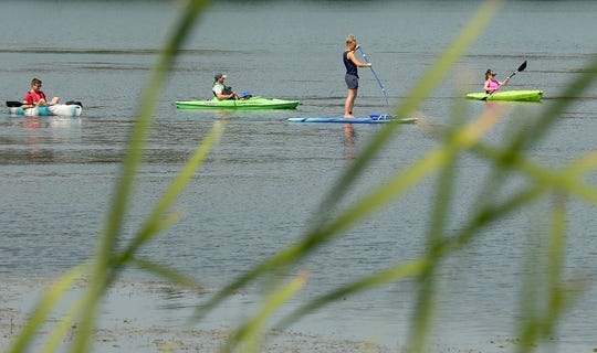 Kayakers and a stand-up paddleboarder are seen through the cattails as they paddle along the shore of Kitsap Lake in July. Kitsap Lake was closed earlier this summer because of cyanobacteria.