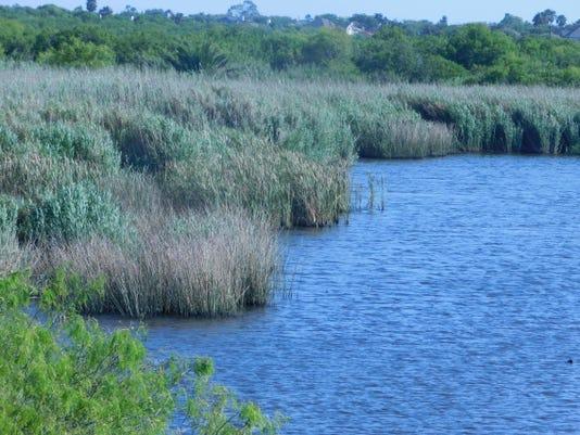 Gator Lake Invasives 3