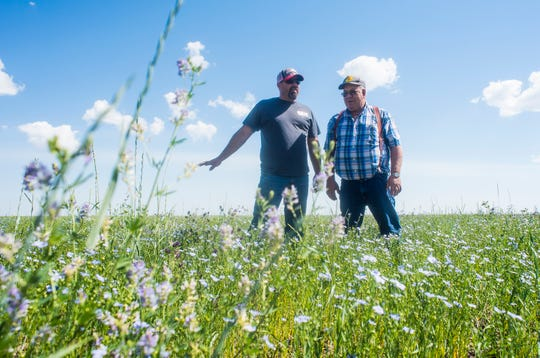 Will and Bob Snodgrass stand in a flax field on their 101-year-old family farm near Pendroy.