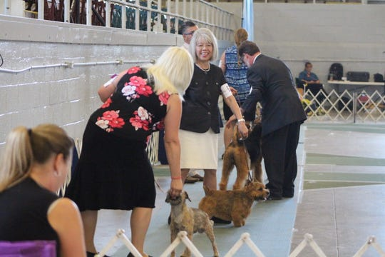 Dozens of people compete in Monday's group competition at the Marion Ohio Kennel Club's national dog show.