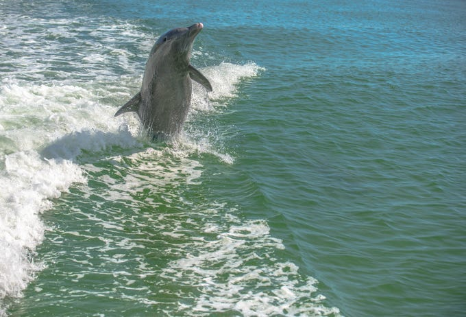 "Debra Kewley, Marco Island, writes, ""I took this aboard the Dolphin Explorer on Marco Island."""