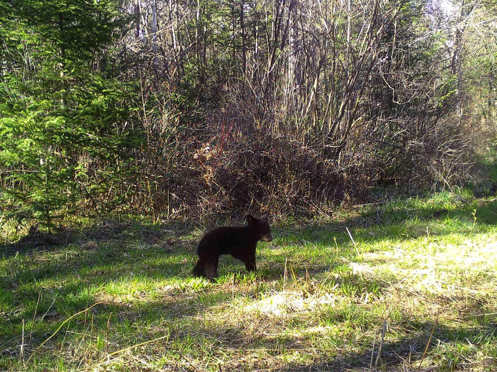Back bear.