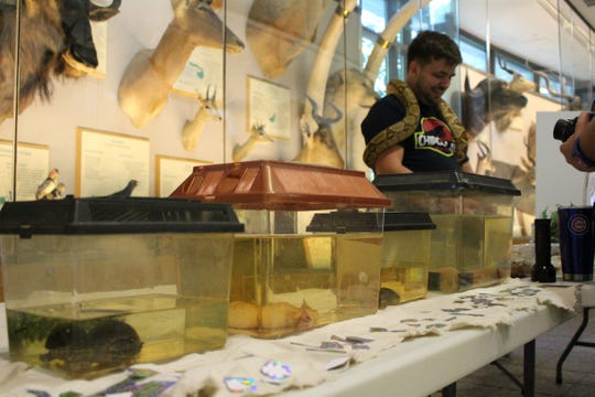 Researcher Levi Storks (University of Missouri) shows off a collection of aquatic animals while wearing a boa constrictor at the 2016 ABS conference outreach fair.