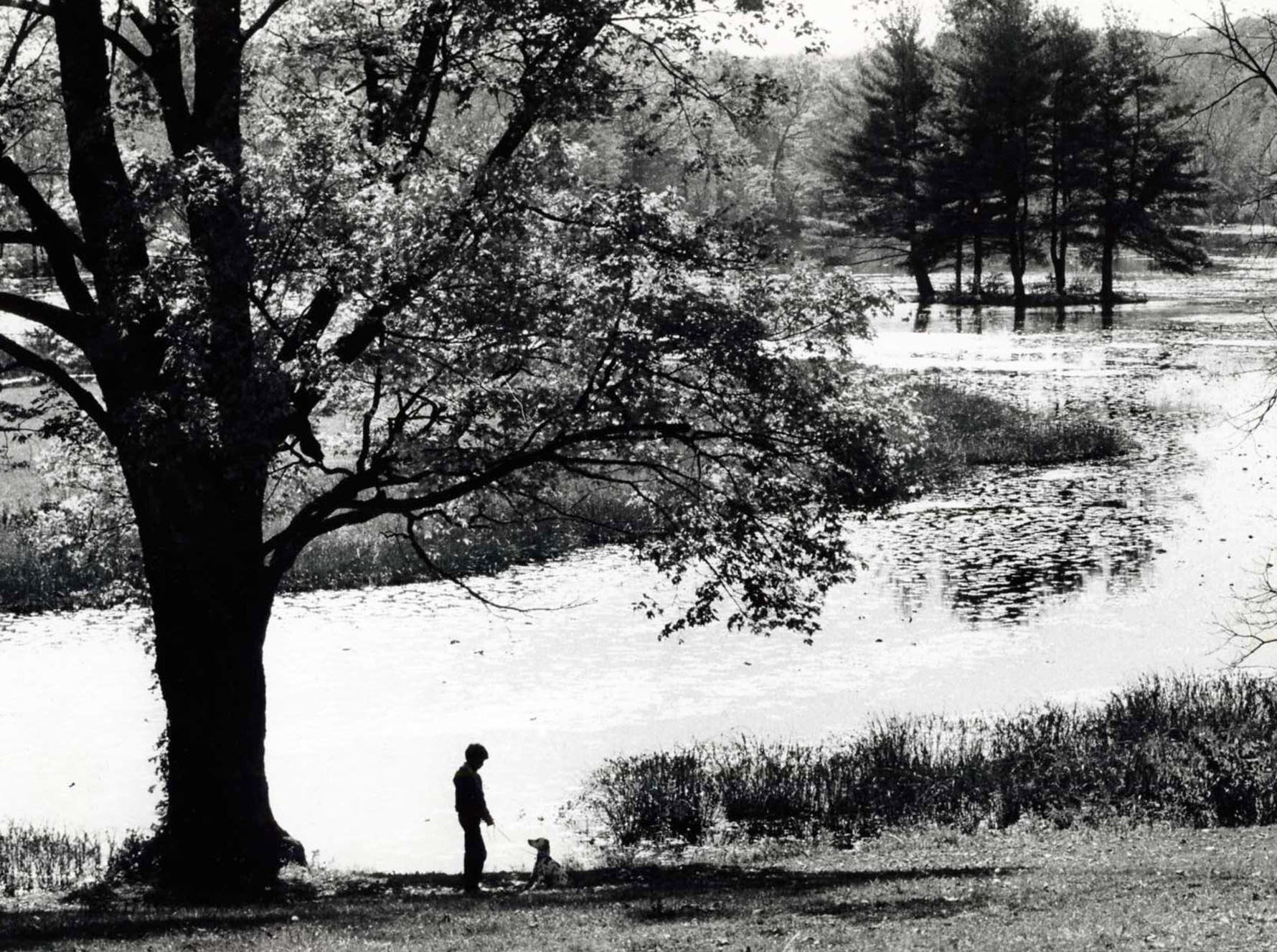 Oct. 14, 1981:  Joel Schmidt walking his dog Beauty at the Ringwood Manor State Park.