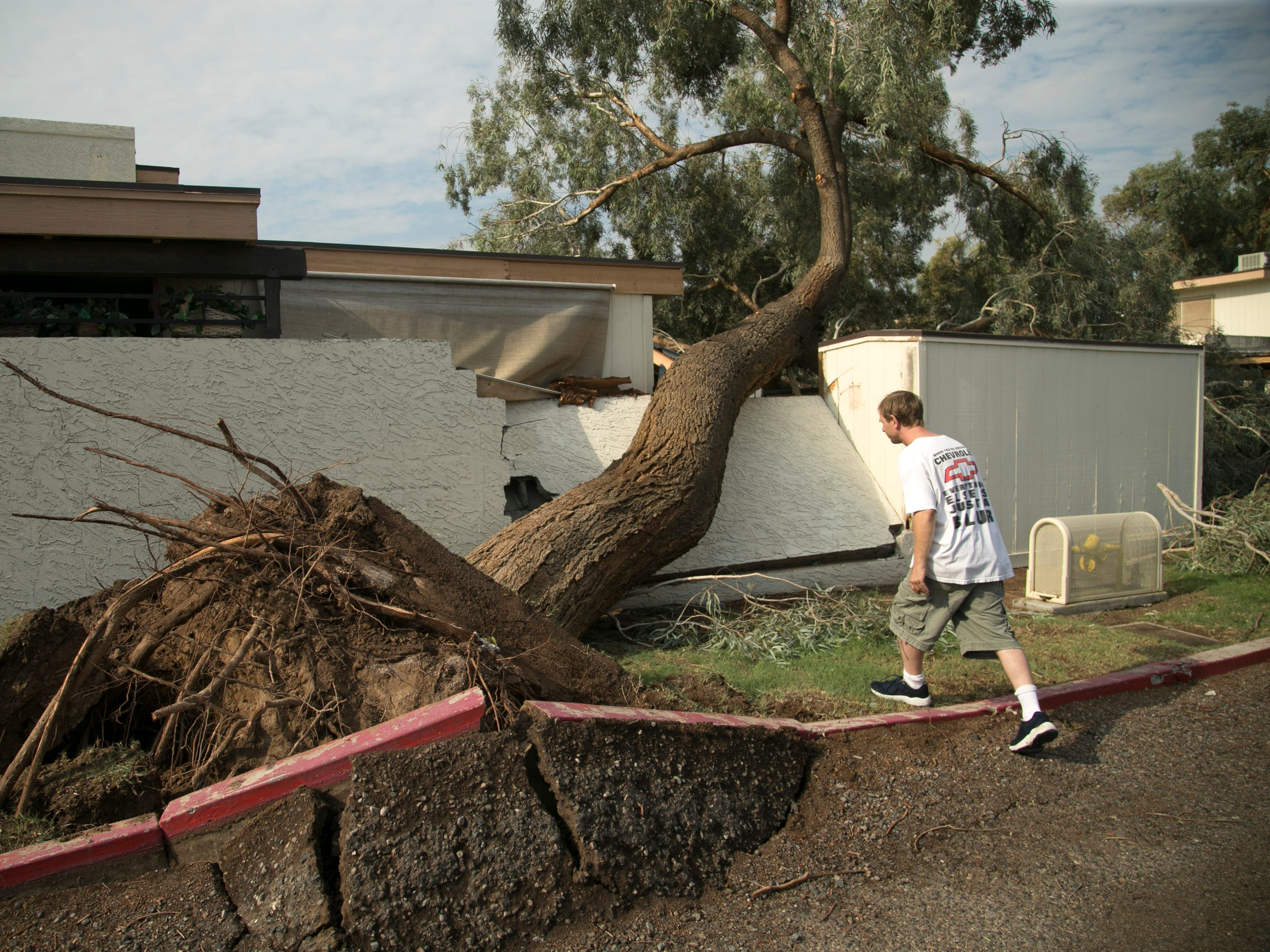 Josh Boyd surveys a large tree that came down just a few feet from his apartment, crushing his backyard wall and two of his family's vehicles near 31st and Northern avenues in Phoenix on July 31, 2018. Heavy winds and rain brought multiple trees down in the apartment complex the night before.