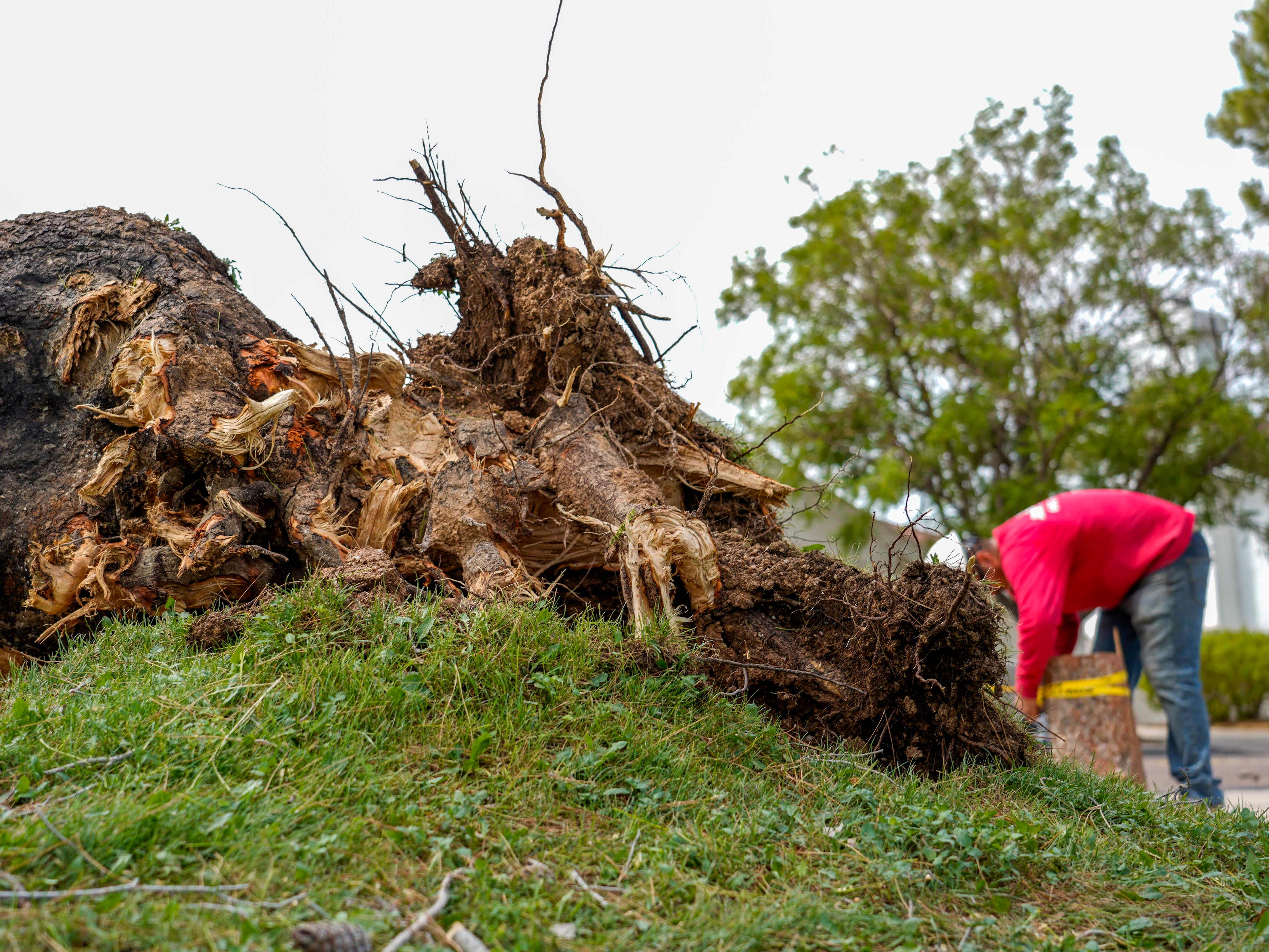 Felipe Piña and his crew cut up fallen trees July 31, 2018, near North 32nd Way and Longhorn Drive that were felled by monsoon storm from the night before.