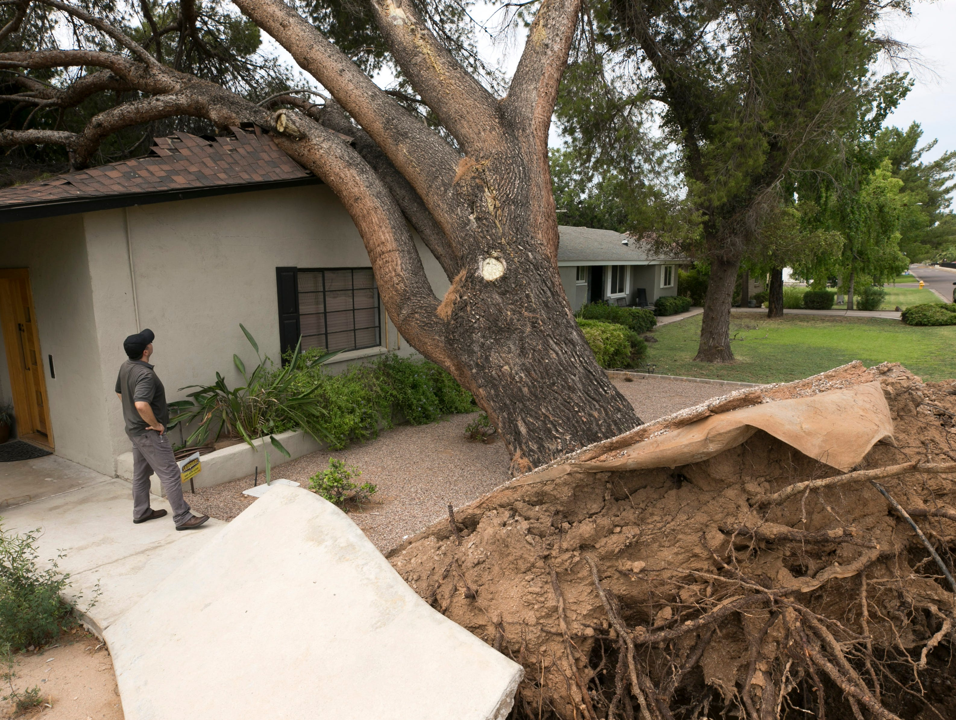 Paul Palmer surveys a large tree on July 31, 2018, that came down on Palmer's house near Bethany Home Road and 15th Avenue in Phoenix. Heavy winds and rain brought the tree down the night. Palmer estimates the tree is at least 50 years old.
