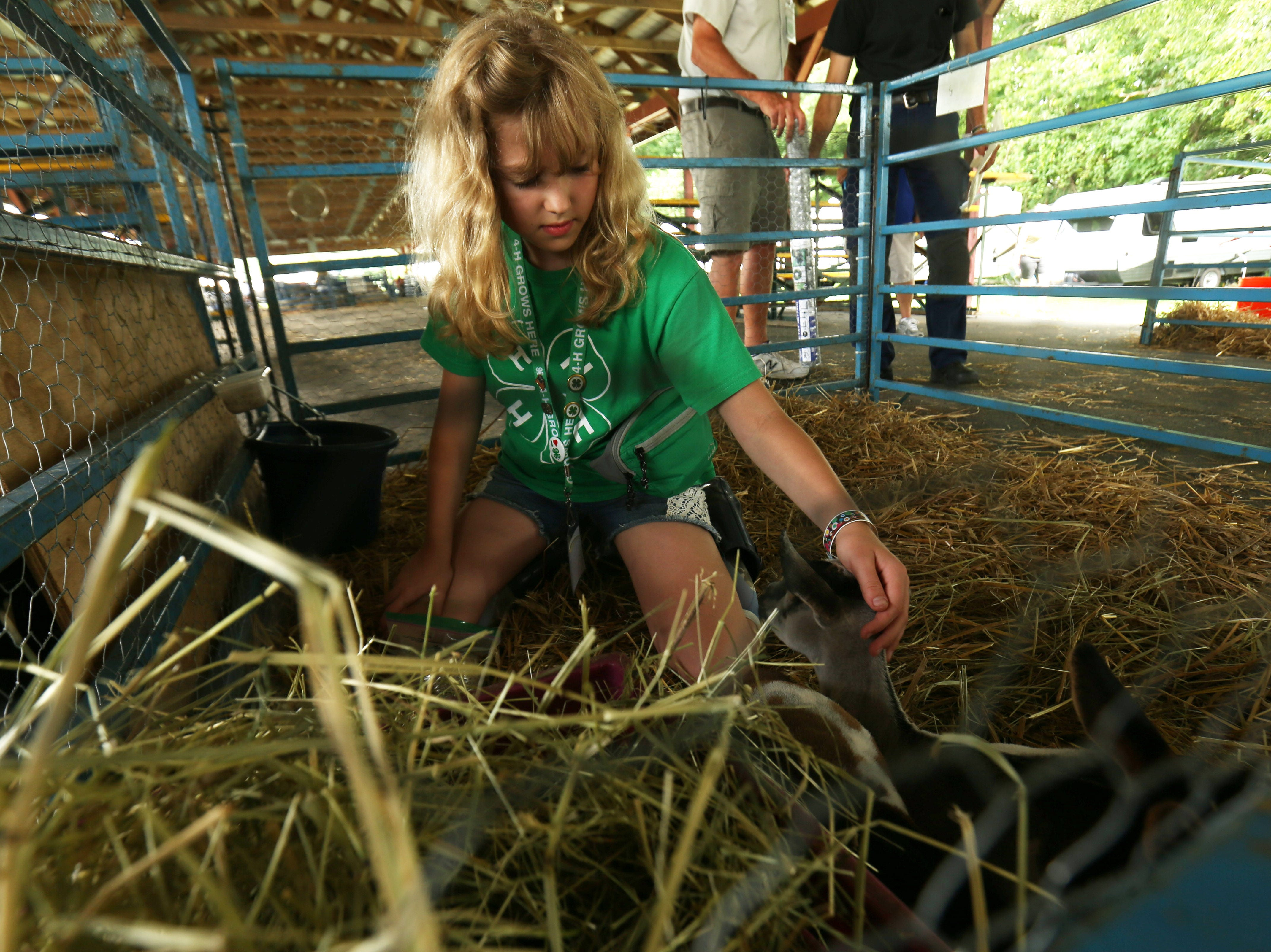 Lauren Jameson of New Paltz tends to her Nigerian Dwarf goats during the Ulster County Fair in New Paltz on July 31, 2018.