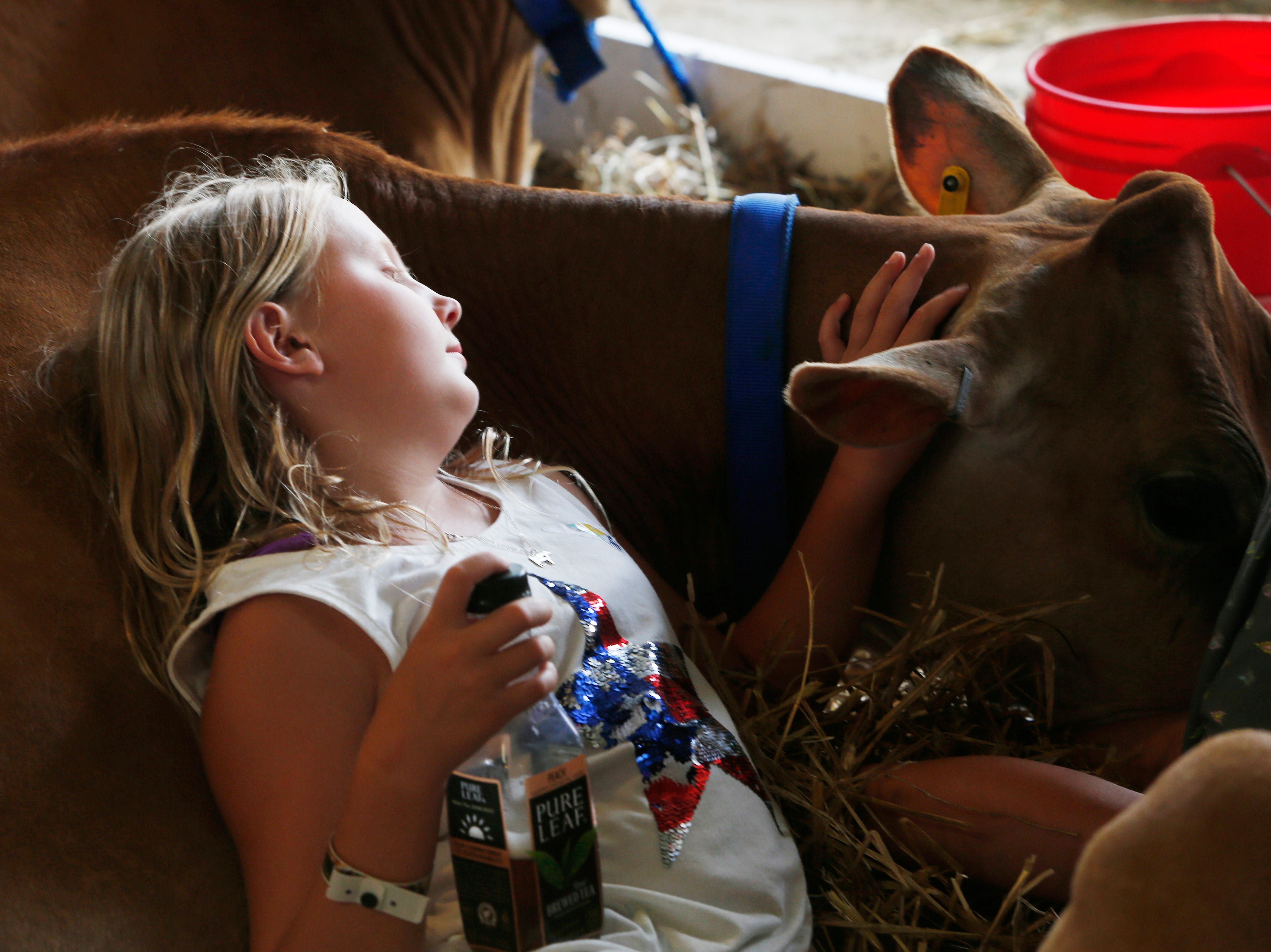Maddison Goodnow of Garnder rests on her cow at the Ulster County Fair in New Paltz on July 31, 2018.