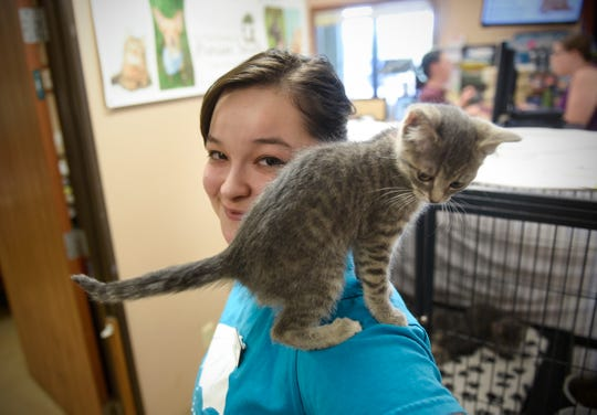 Sandy Watters smiles as a kitten perches on her shoulder Tuesday, July 31, at the Tri-County Humane Society.