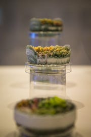 Suzanne Anker's 'Remote Sensing: Micro-Landscapes' featuring landscaptes created in 24 Petri dishes is now showing at the Brandywine River Museum of Art.