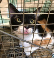 About 50 cats were rescued from a garbage-and feces-covered home in Howell.