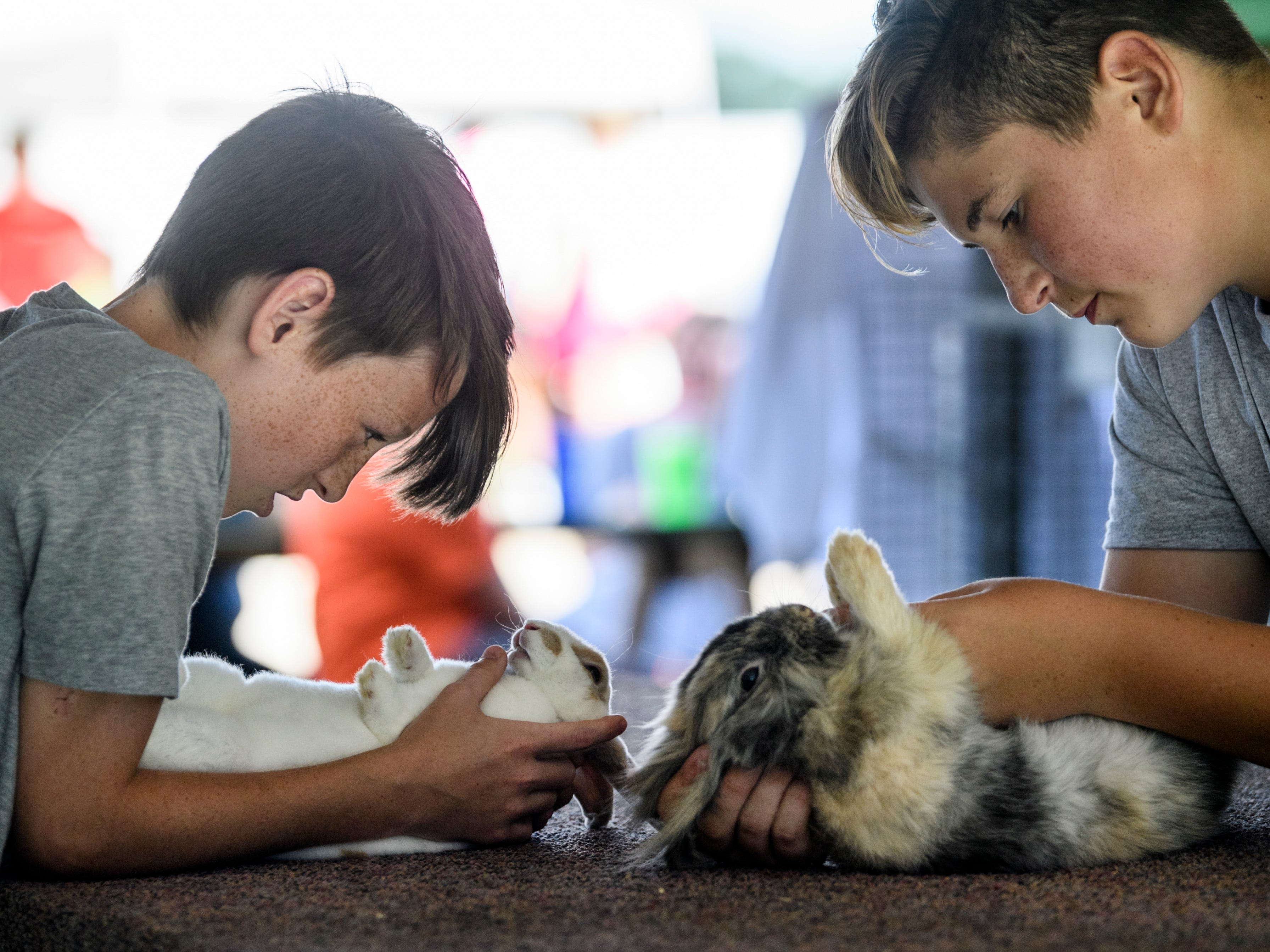 Russell Heim, left, and Jordyn Rhule, right, discuss the upcoming Rabbit Showmanship competition as they inspect their rabbits Teeny, left, and Ace, right, at the Warrick County Fair in Boonville, Ind., Wednesday, July 18, 2018.