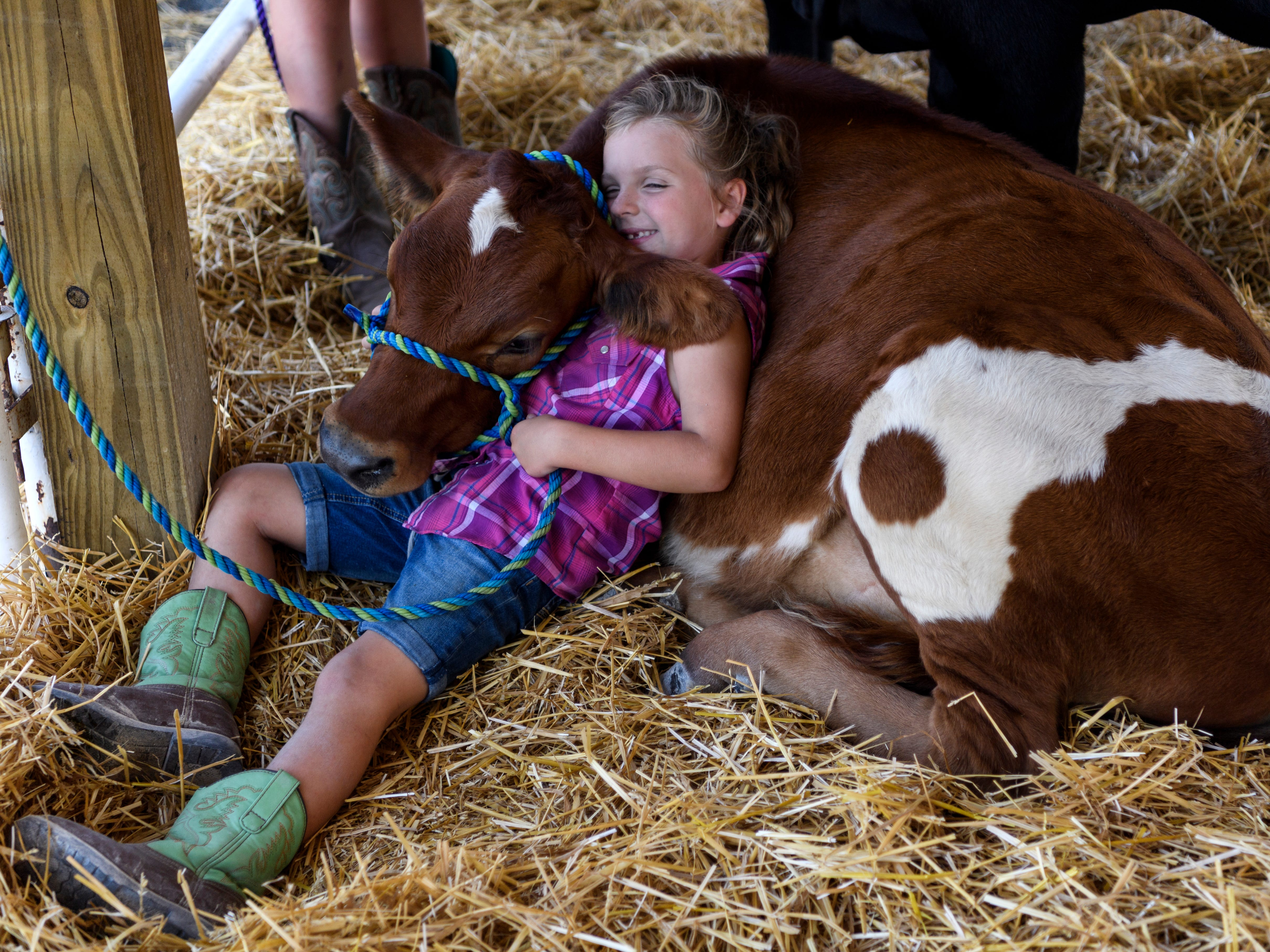 "Paige Bennett, 7, of Robards, Kentucky, takes a moment to snuggle with her bottle-calf Rookie before preparing for the Cattle Show alongside her older sisters, Anna and Madelyn, not pictured, at the Henderson County Fairgrounds,  July 20. ""She'll halter him up and walk him like a puppy dog,"" Paige's mother, Cassandra Bennett said."