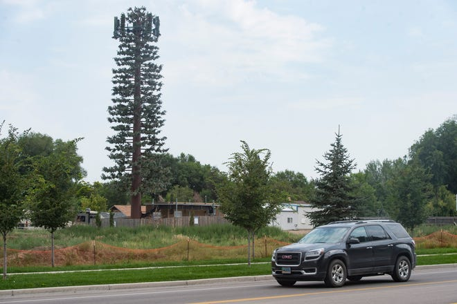 Traffic passes by a cell phone tower disguised as a pine tree on Shields Street. Cell service carriers are planning more towers in Fort Collins and Larimer County.
