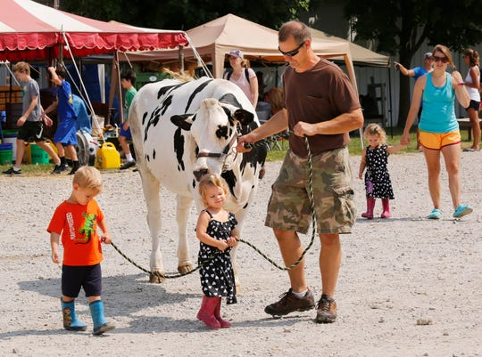 A family walks a Holstein heifer at the Tippecanoe County 4-H Fair in July 2018.