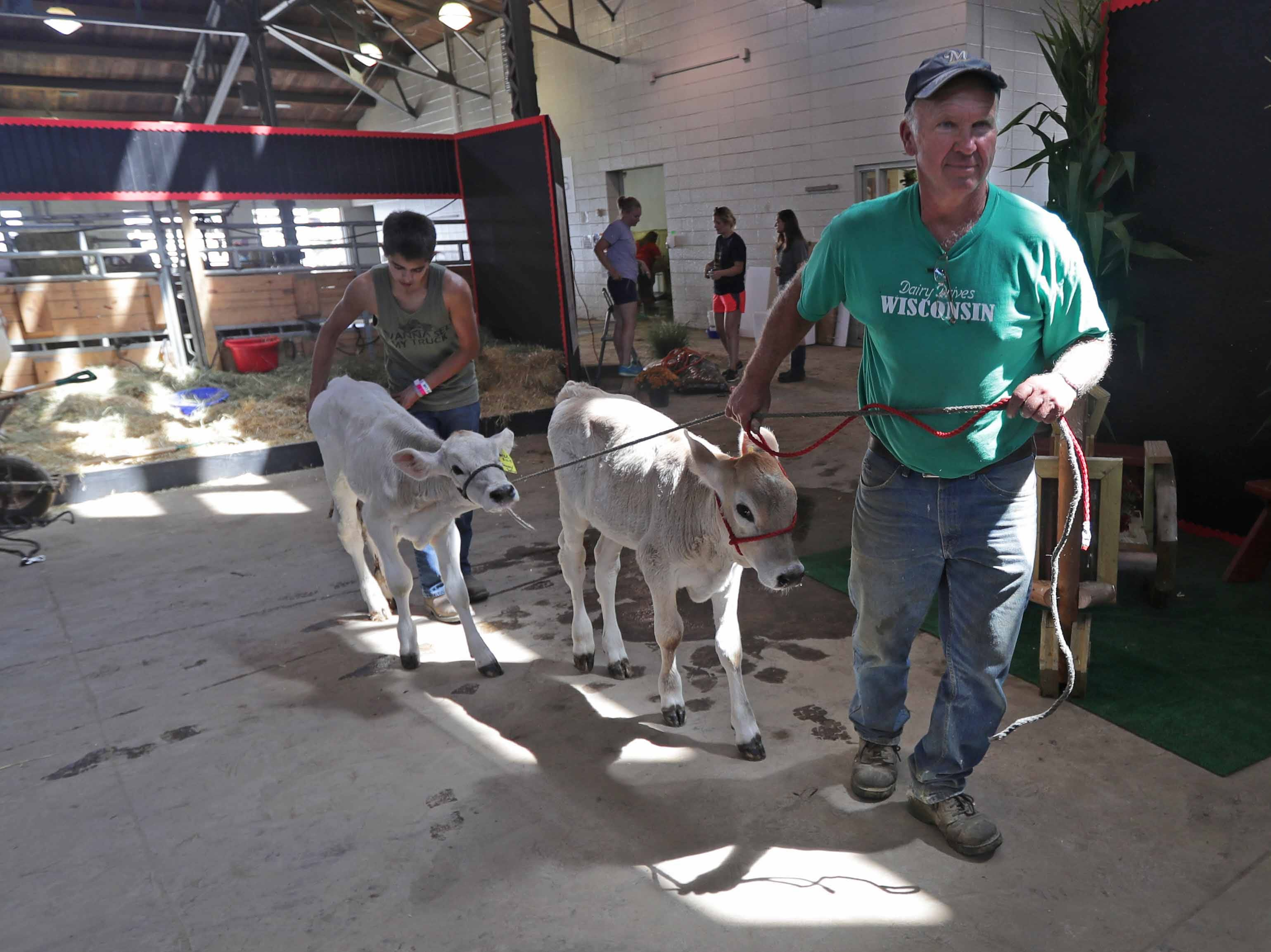 Tom Oberhaus (front), with Cozy Nook Farm out of Waukesha, and A.J. Wolfe, age 14, a Waukesha 4H member, walk with a couple of sister calfs to their corral inside the House of Moo, an interactive dairy education center.  Work was being done in preparation for the opening of the Wisconsin State Fair at State Fair Park on Wednesday, August 1, 2018. The fair, in West Allis, runs from Thursday, August 2 to Sunday, August 12. -  Photo by Mike De Sisti / Milwaukee Journal Sentinel