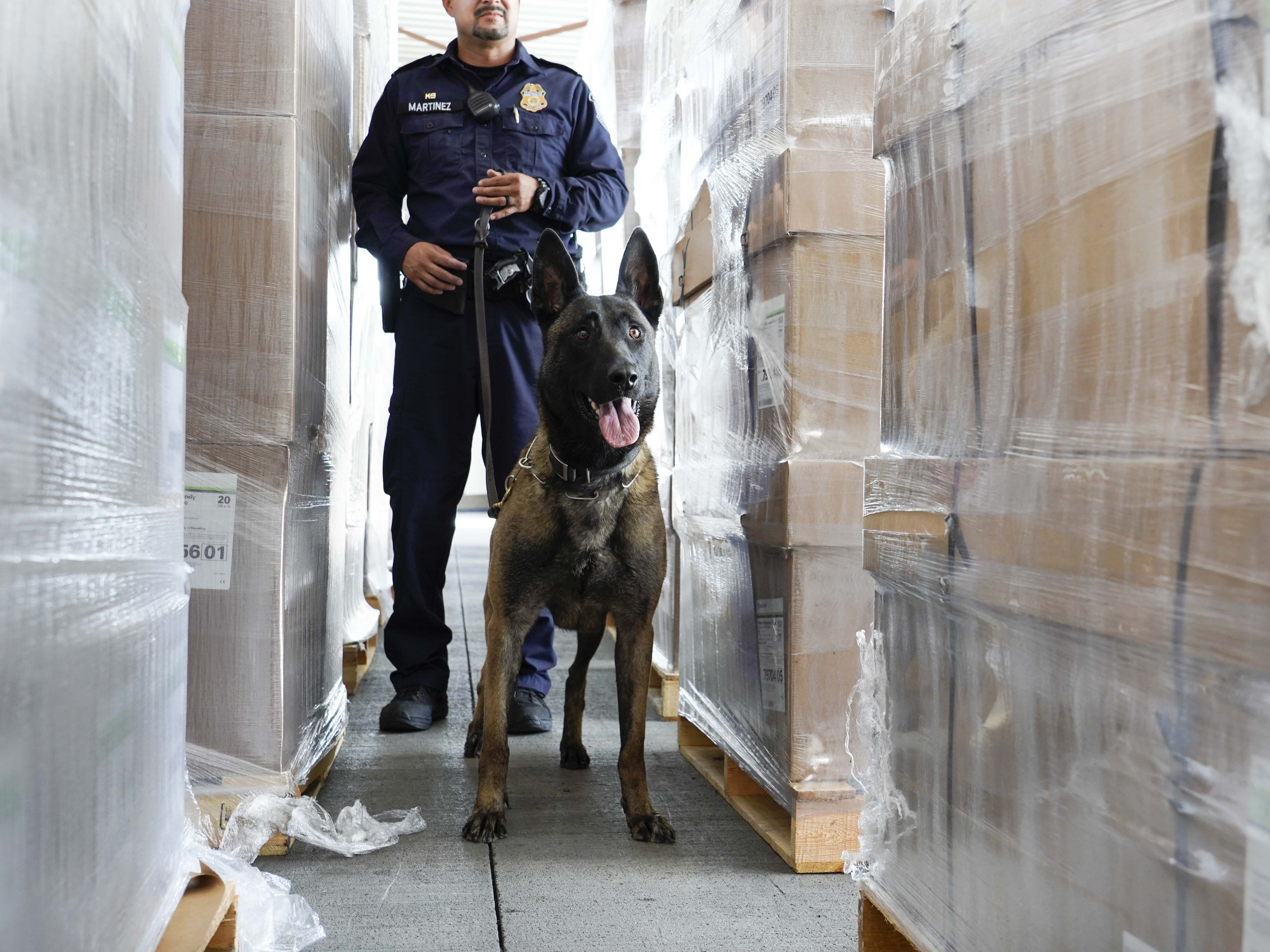 K-9 dog performs his duty with Customs and Border Protection and National Guard personnel Aug. 1, 2018, at the Port of Nogales (Mariposa Crossing) in Nogales, Arizona.