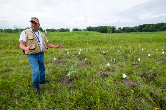 Matt Shackelford, a senior scientist with DTE Energy, talks about a group of tagged Sullivant's milkweed plants at the site of DTE's future Blue Water Energy Center in East China.