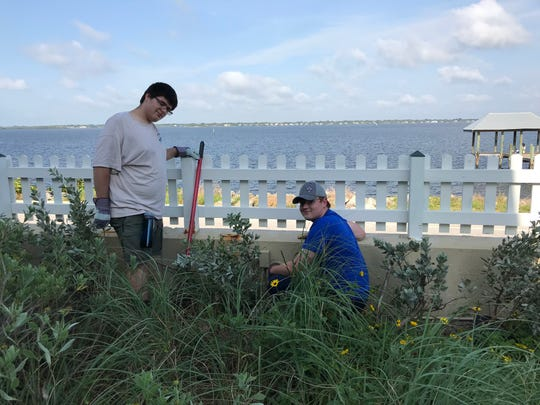 Scouts Russell Crow and Collin Whitney from Troupe 238 replant silver buttonwood destroyed by Hurricane Irma at the House of Refuge Museum.