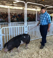 Waylon Klitzman, a sophomore at Evansville High School, shows one of his pigs at the Rock County 4-H Fair. He sold his pig, Roo, for more than $10,000, donating the money from the sale to support Beat Nb in finding a cure for neuroblastoma.